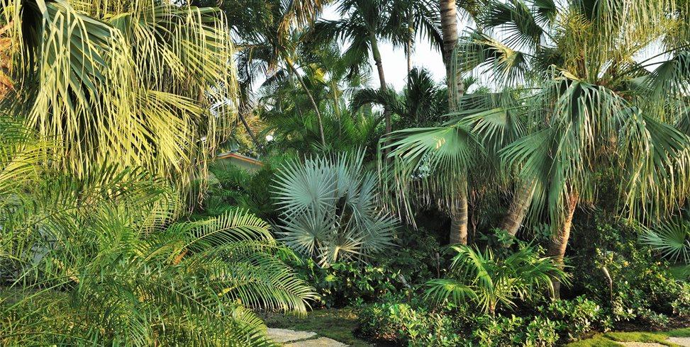 Tropical, Plants Craig Reynolds Landscape Architecture Key West, FL