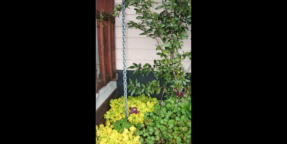 Vine With Black  Garden Design