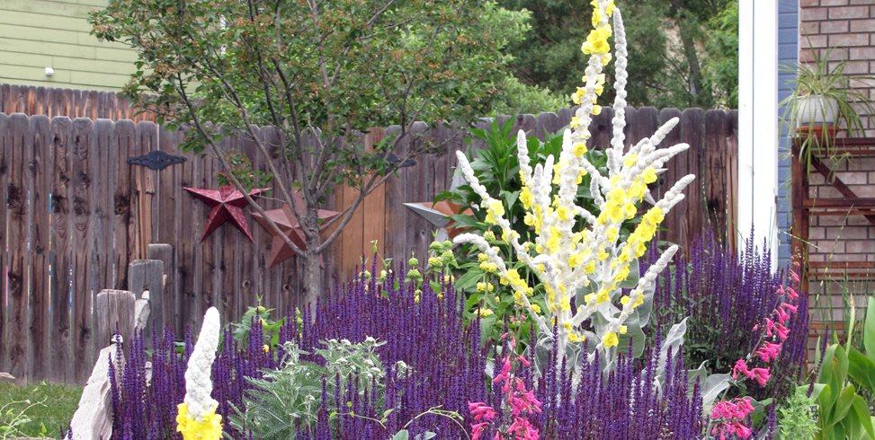 Xeriscape Plants J&S Landscape Longmont, CO