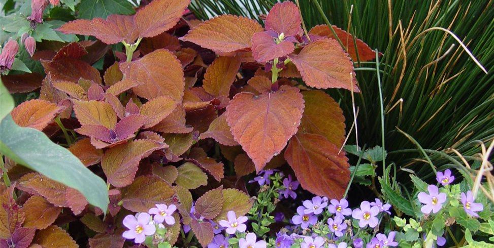 Plant Combo Garden Design Maureen Gilmer Morongo Valley, CA