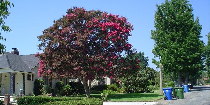 Maureen Gilmer Morongo Valley, CA