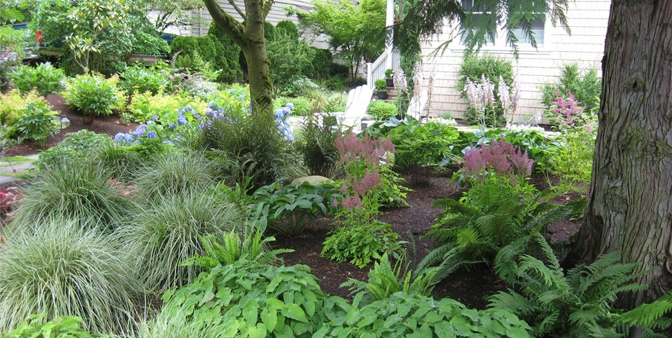 Plants, Woodland, Ferns Spring Greenworks Bellevue, WA
