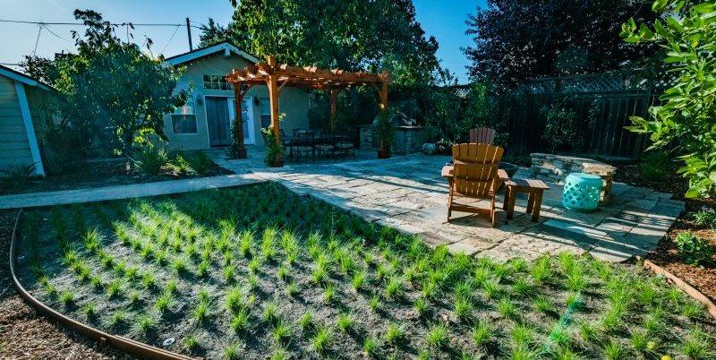 California Sedge, Low Water Lawn Greener Environments Los Osos, CA