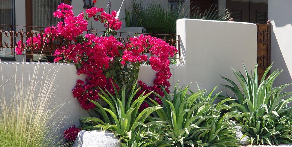 Heat Loving Plants Maureen Gilmer Morongo Valley, CA