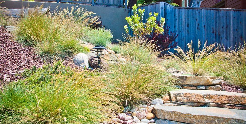 Xeriscape Planting, Grasses, Rocks Ecotones Landscapes Cambria, CA