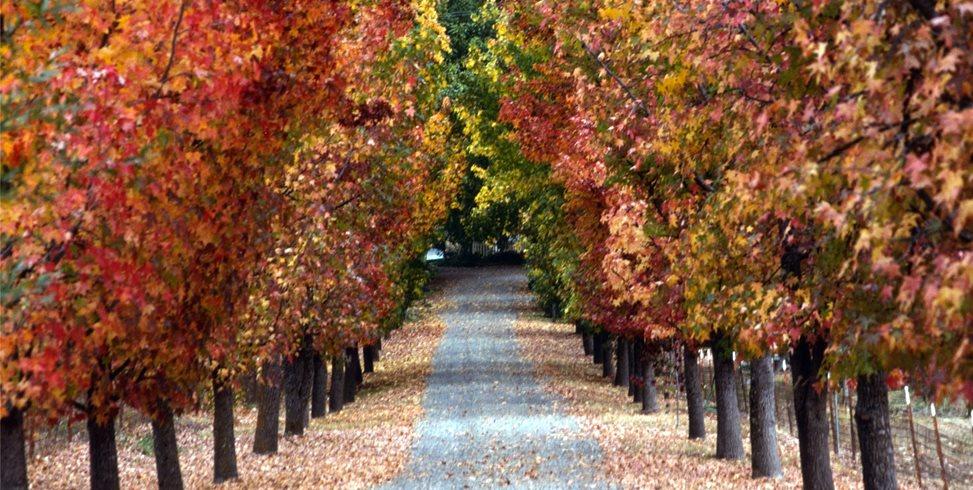 Allee Mediterranean Landscaping Maureen Gilmer Morongo Valley, CA