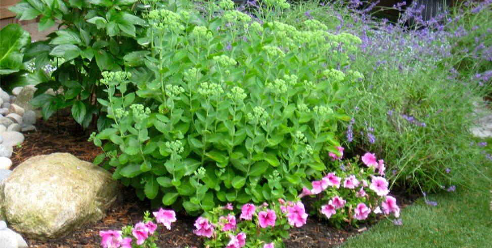 Plants, Pink Spring Greenworks Bellevue, WA
