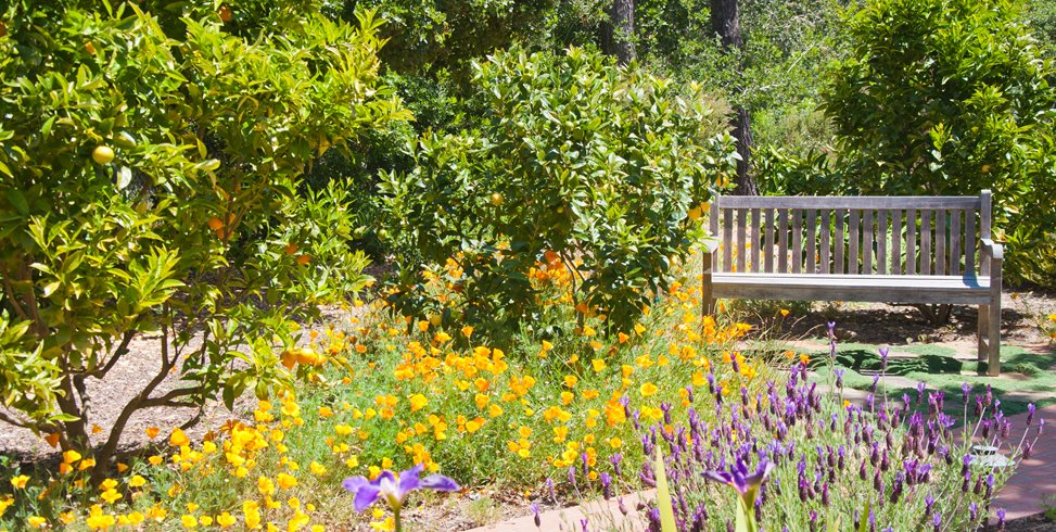 Poppies, Citrus Trees, Weathered Wood Bench Ecotones Landscapes Cambria, CA