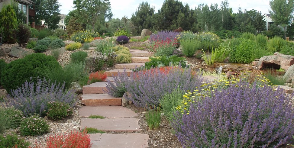 Xeriscaping ideas landscaping network for Garden design xeriscape