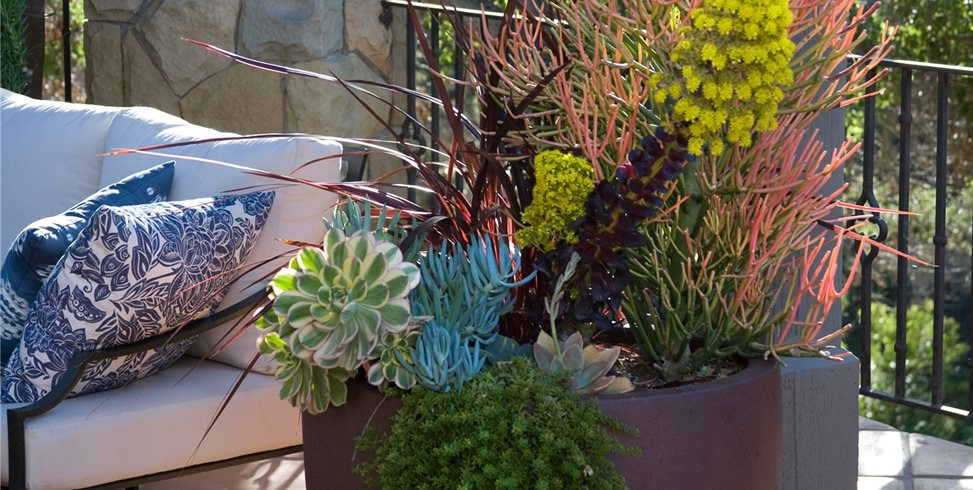 Succulent Container Grace Design Associates Santa Barbara, CA