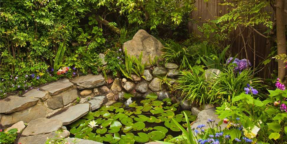 Pond Area Tropical Landscaping Landscaping Network Calimesa, CA
