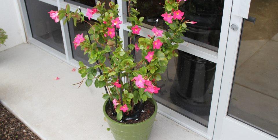 Problem Solving Plant Cage Global Garden Friends Santa Rosa, CA