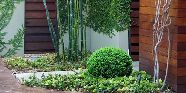 Bamboo, Boxwood Decor and Accessory David Wilson Garden Design Austin, TX