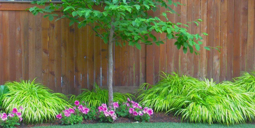 Plants, Border Spring Greenworks Bellevue, WA