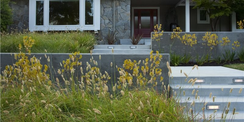 Front Yard Entrance Front Yard Landscaping Shades of Green Landscape Architecture Sausalito, CA