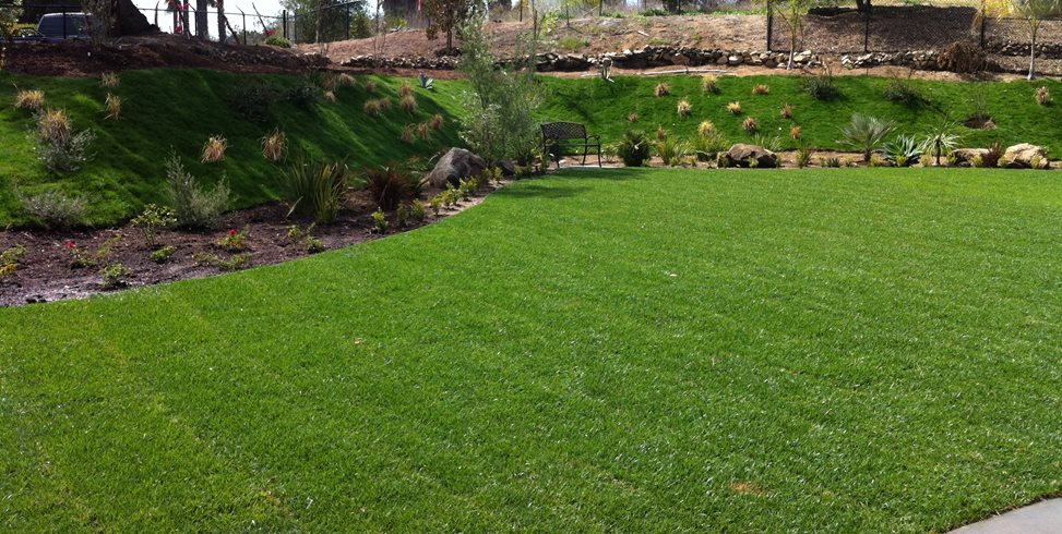 Backyard Lawn, Grass Hillside Aloha Landscape Murrieta, CA