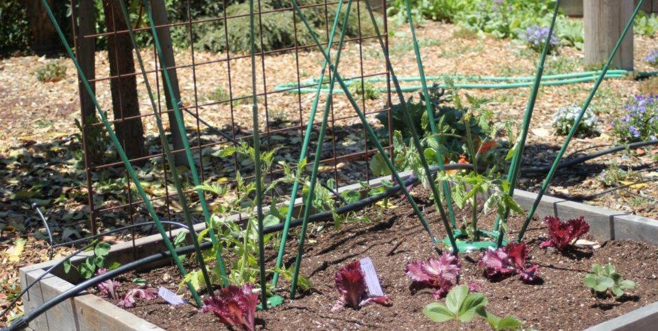 Extendable Plant Cage Global Garden Friends Santa Rosa, CA